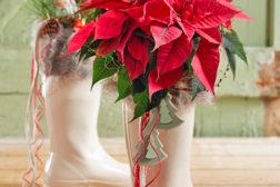 Julenissens julestjernestøvel