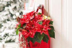 Velkommen hjem – dørdekorasjon med julestjerner