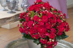 Rød jul med begonia