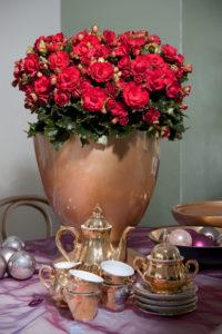 Rød begonia 'Grace' til julefest