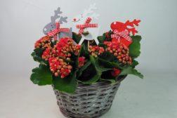 6 røde juleblomster til den kreative
