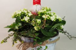 Blomstrende julegave