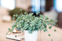 Studentens stakkars planter