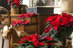 Pynt der du kan – store krukker, skuffer og ting du har kan bli nydelige juledekorasjoner