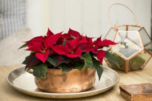 Kobber og julestjerner, en stemningsfull kombinasjon