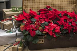 Pynt i det du har - her har en gammel koffert blitt et perfekt rom for et brett julestjerner