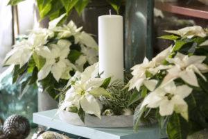 Juleeventyr med hvite julestjerner, granbar og lys