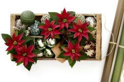 Levende julegave – julestjerner og juledekor i boks