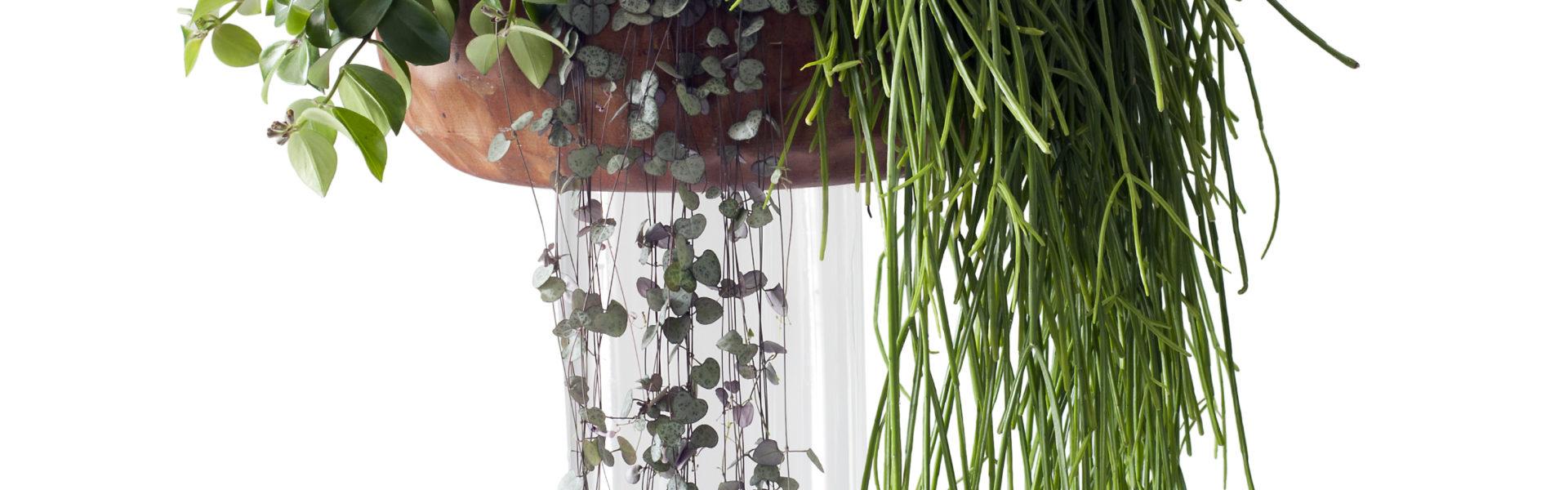 Grønne planter i ampler – frisk høst hjemme