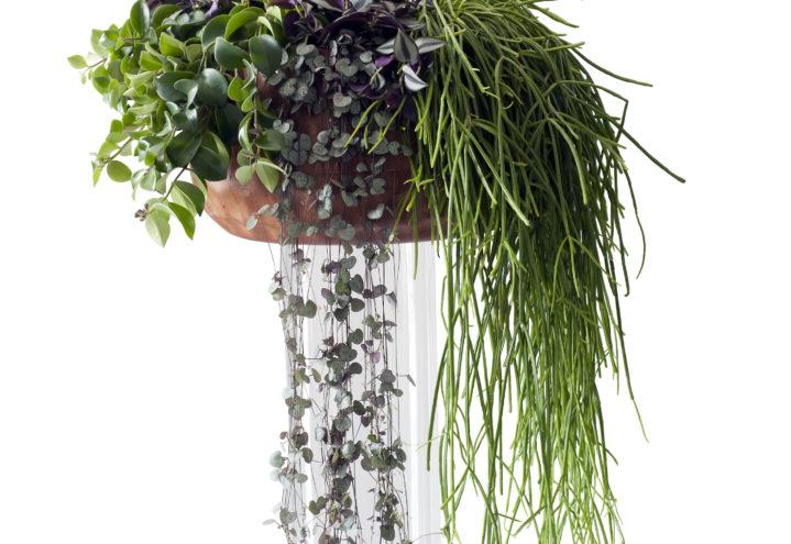 Grønnplanter i samspill - Aeschynanthus, Ceropegia, Rhipsalis