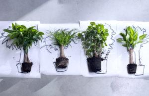 Grønnplanter kommer i mange fasonger, både over jorden og i røttene
