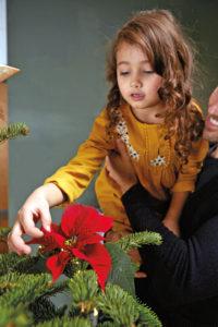 Er julestjernen virkelig ekte?
