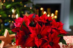 Julestjerner er julestemning