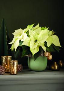 Hva sier jul mer enn hvite julestjerner og kobber?