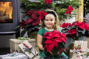 Julestjerner er fine julegaver...årets julegavetips!