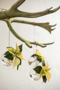 Ta med naturen inn med tørre grener og hengende blomstervaser