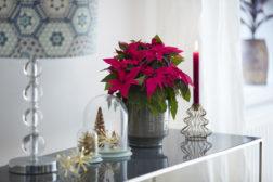 Julestemning på liten plass med julestjerner
