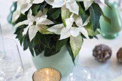 Julepyntet bord i hvitt, med hvite julestjerner