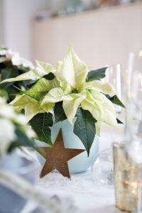 En stjerne til en julestjerne