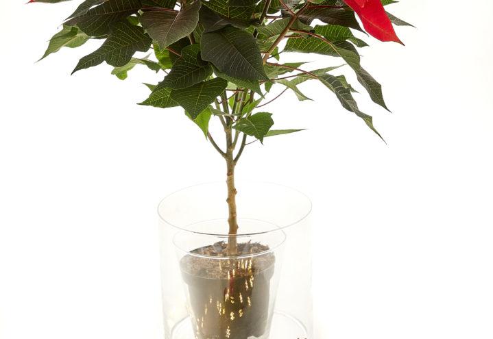 Julens flotteste lysende potte lager du selv! Trinn 1