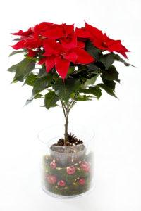 Julens flotteste lysende potte lager du selv! Trinn 5 og ferdig