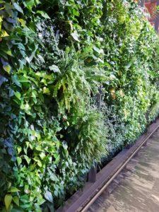 Grønne vegger i store rom