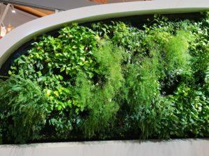 Grønne vegger, Gardermoen