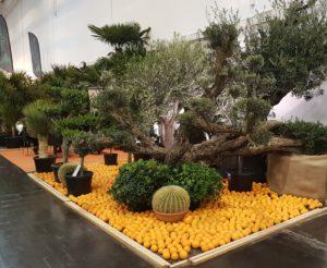 Utstilling på messen IPM-Essen - ikke alle planter er like lett å ta med hjem