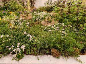 Humlevennlig og frodig - eksempel på hage fra IPM Essen, verdens største utstilling for profesjonelle gartnere