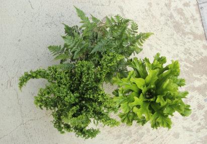 Planter på kontoret – gode luftrensere for bedre inneklima