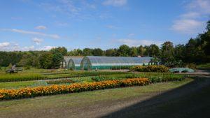 Planteskole, produksjon av busker