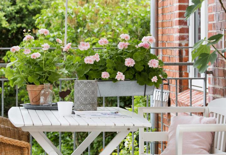 Sommer på balkongen - med pelargonia
