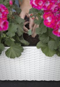 Langtidsvirkende gjødselpellets til sommerblomstene gir fin blomstring hele sommeren