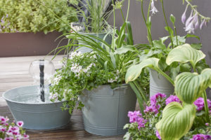Hage på liten plass - prydgress, bladliljer og pelargonia i bøtter
