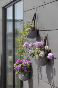 Heng plantene på veggen!