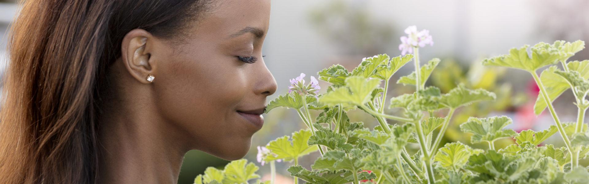 Duftpelargonia – verdt å bli kjent med!
