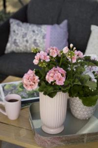 Pelargonia på stuebordet