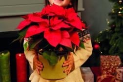 Julestjerne 2019, ønskeliste til jul 5