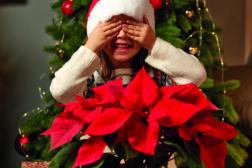 Julestjerne 2019, ønskeliste til jul 6