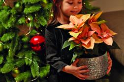 Julestjerne 2019, ønskeliste til jul 7