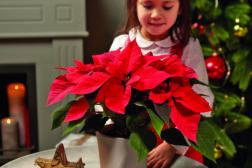 Julestjerne 2019, ønskeliste til jul 8