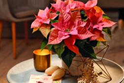 Julestjerne 2019, ønskeliste til jul 9