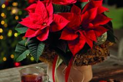 Julestjerne 2019, fargerikt julehjem 1