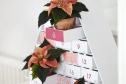 Julestjerne 2019, fargerikt julehjem 30
