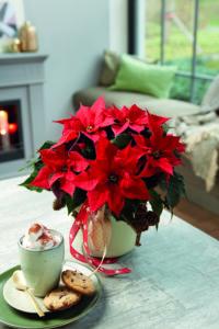 Julekoselig med julestjerne