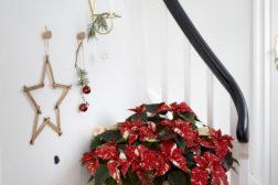 Julestjerne 2019, fargerikt julehjem 6