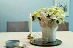 Julestjerne 2019, vase i hvitt 5