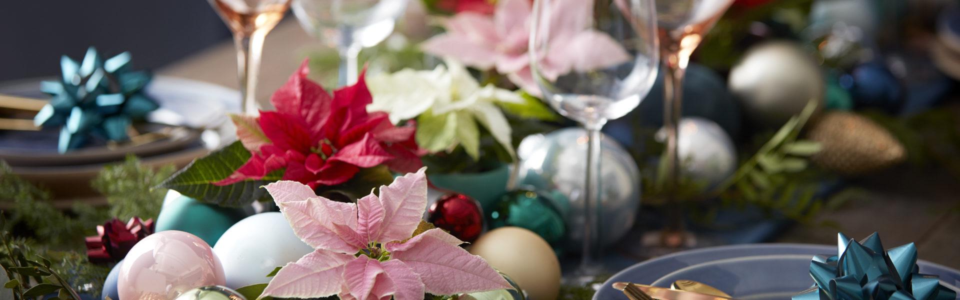 Fargerik julestemning med julestjerner