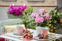 Herlig blomstrende sommer hjemme