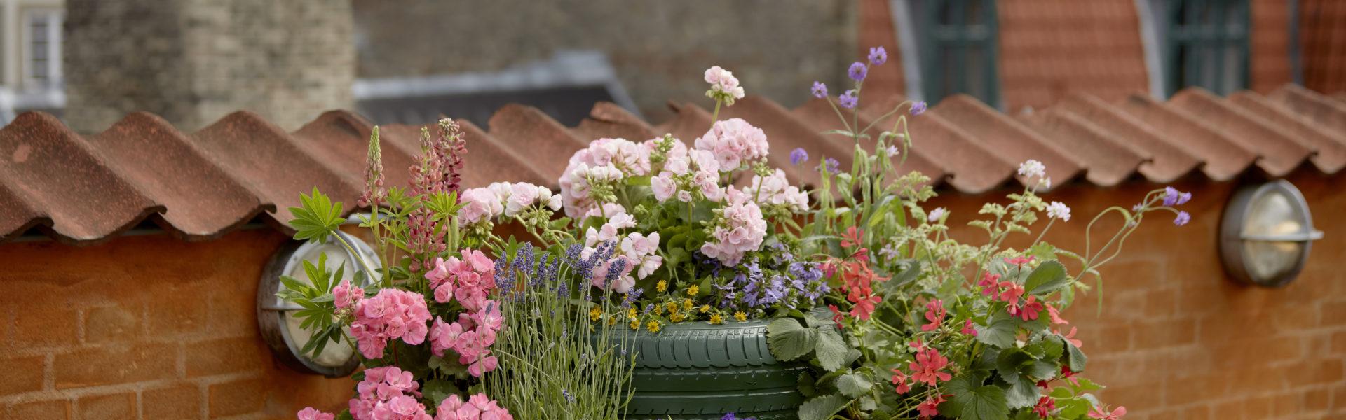 Plante i byen – tips og triks for en vakker bybalkong